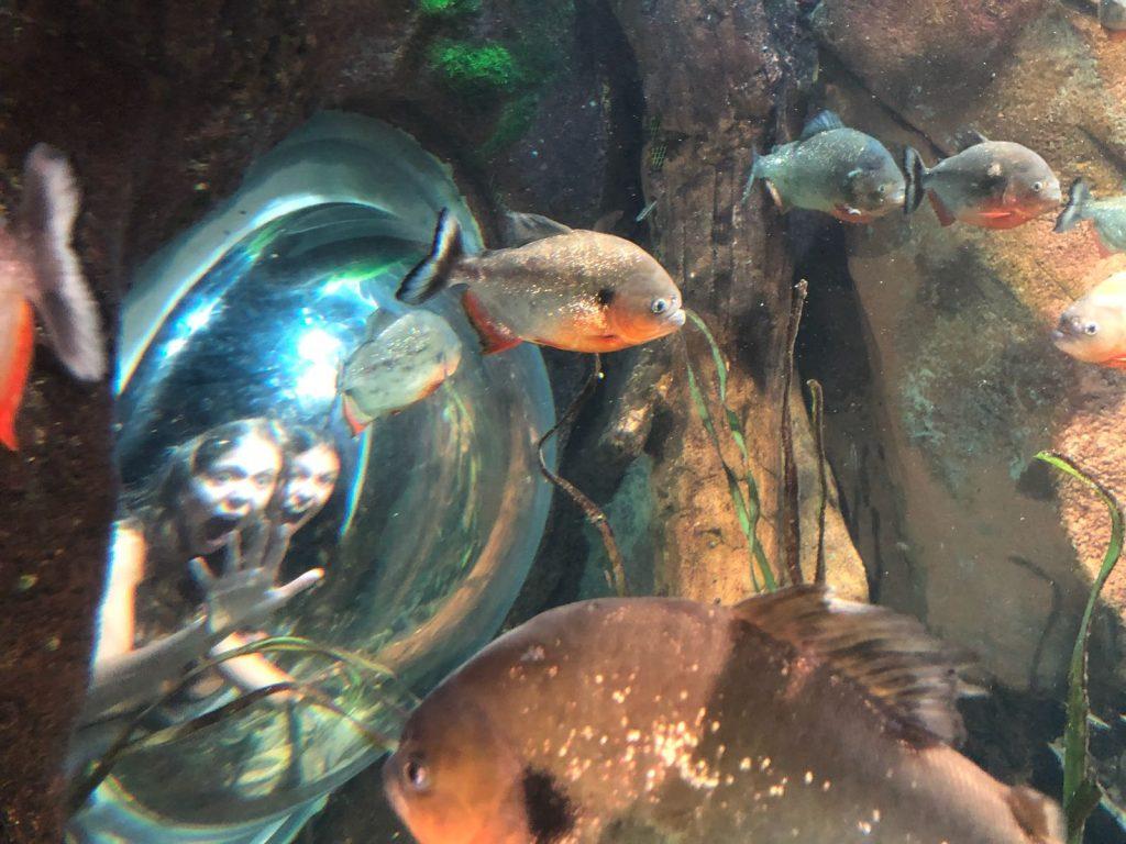 with fish georgia aquarium