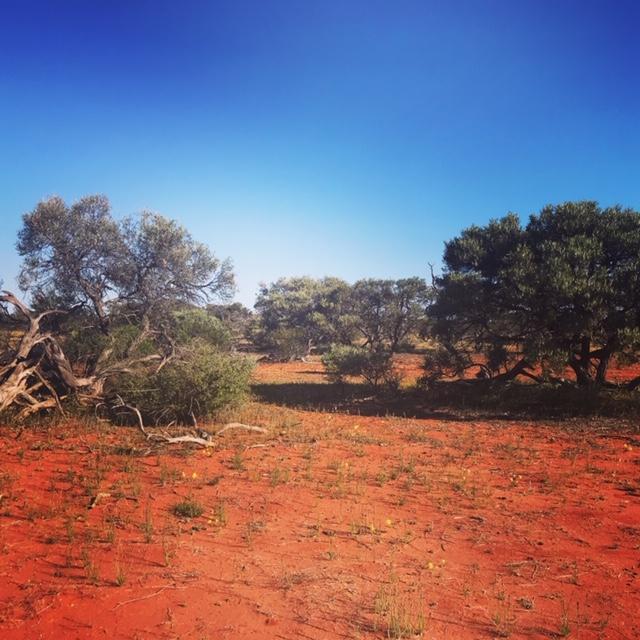 Desert Road Western Australia