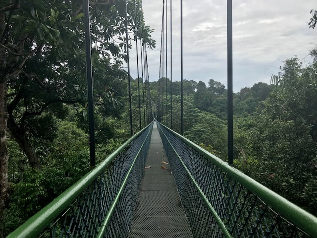 phot of Macritchie treetop trail